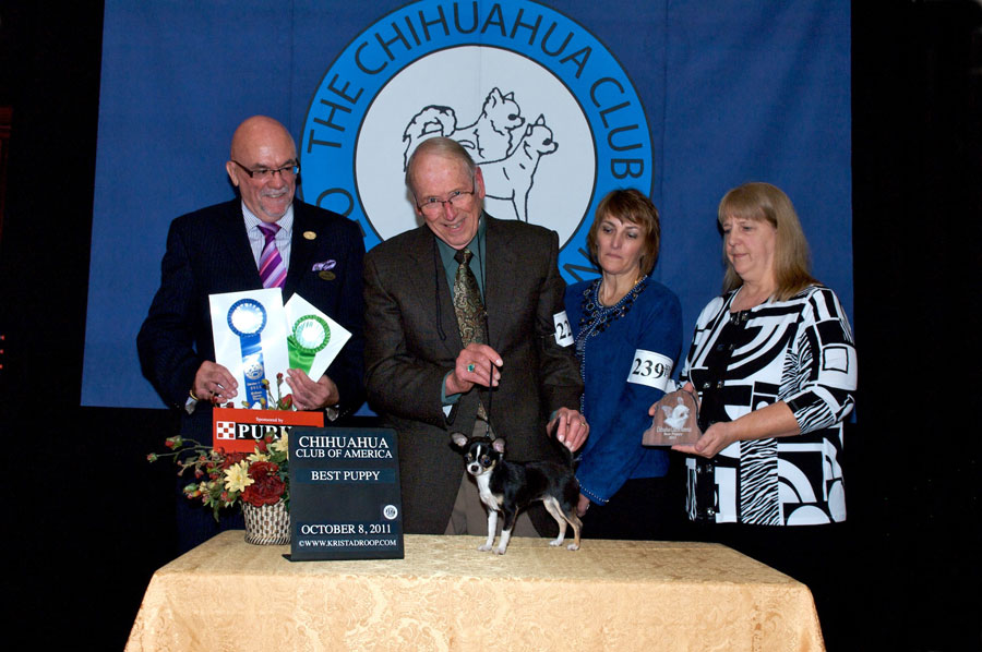 2011 Fall National Specialty-best-puppy
