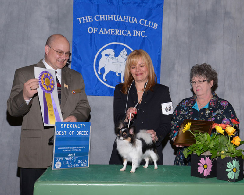 2013 CCA Rotating Specialty  Breed BOB