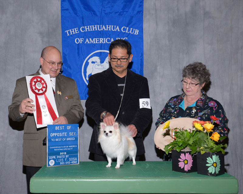 2013 CCA Rotating Specialty Breed BOS to BOB