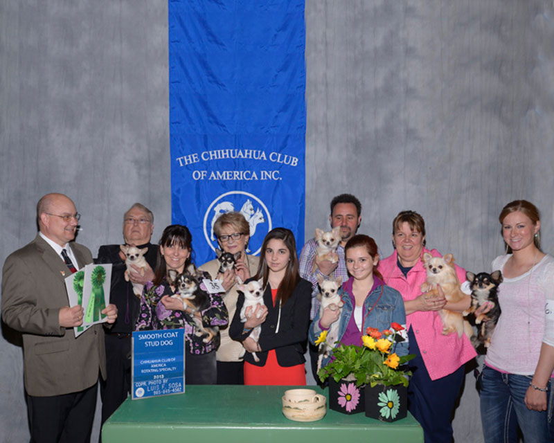 2013 CCA Rotating Specialty Breed Best Stud Dog