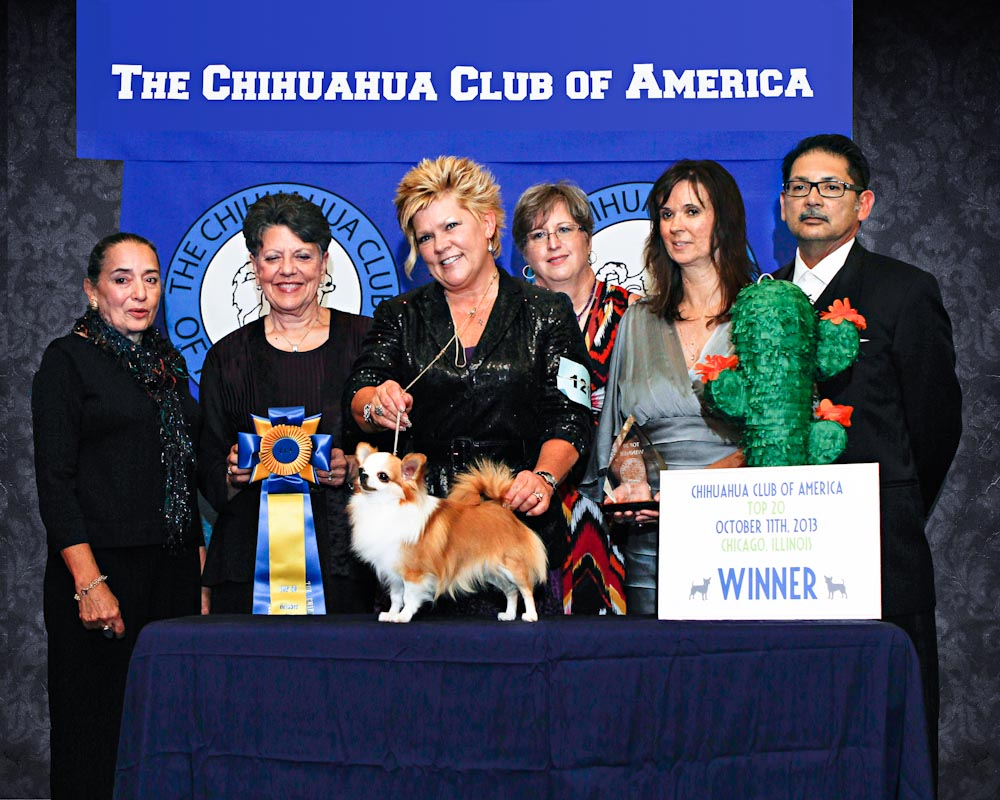 2013 CCA TOP 20 WINNER GCh. Victory Mask of Zorro Breeeder/Owners: Kathryn V. & Savanna Hulstein.