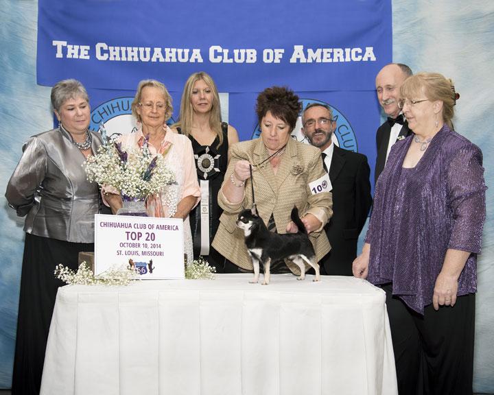 2014 CCA Top 20 GCH Dazzles Texas Streak