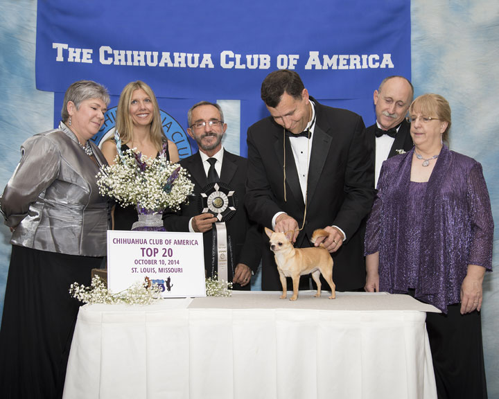 2014 CCA Top 20 GCH Ouachitah Glitz and Glamour at Lone Pine