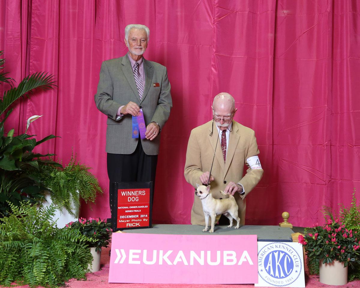 Winners Dog SC - 2014 CCA Eukanuba Regional